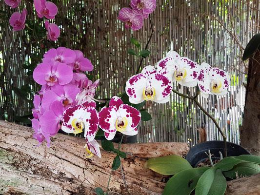 Der Orchideengarten ist eine Oase der Ruhe