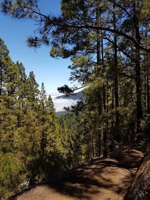 Oraganos-Höhenweg mit Blick durch den Kiefernwald nach Norden in Richtung Aguamansa
