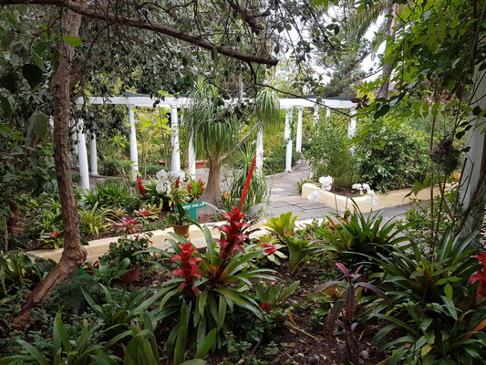 Größte Orchideensammlung Teneriffas