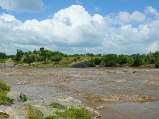 Der Mara Fluss ist bekannt für die saisonale Massenüberquerung des Flusses durch die Gnus.