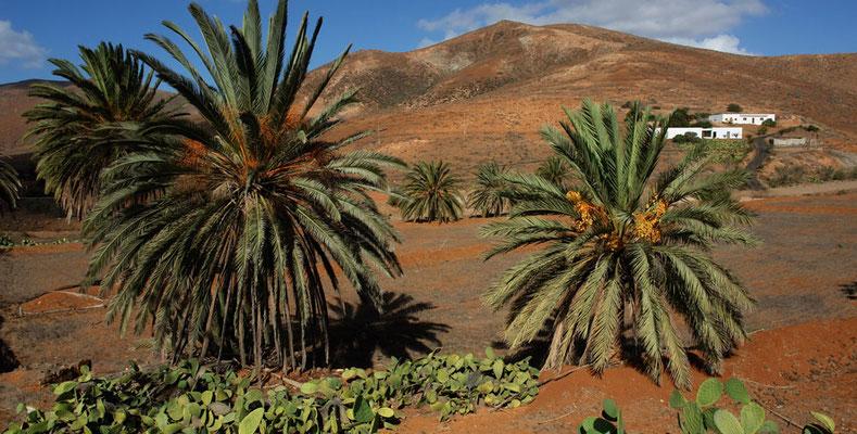 La Vega de Río de las Palmas, die schönste Palmenoase der Insel