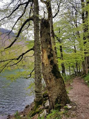 Ein gut ausgebauter Wanderweg führt um den See.
