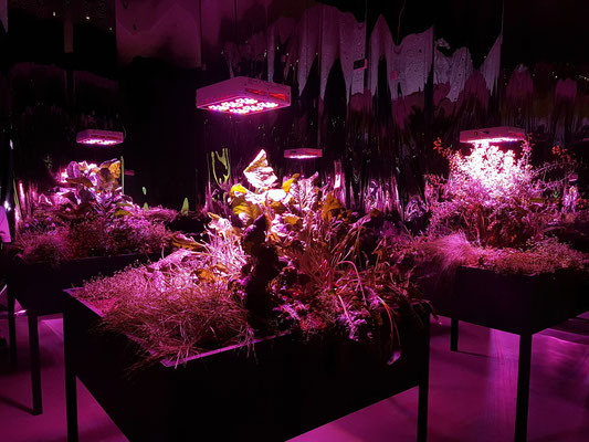 Meg Webster (1944, USA): Solar Grow Room, 2016 (-2017)
