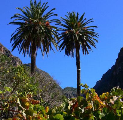 Im oberen Valle Gran Rey