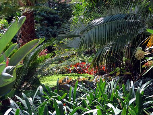 Botanischen Garten (Estufa Fria)