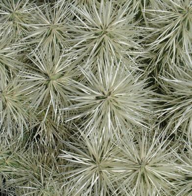 Im Jardín de Cactus