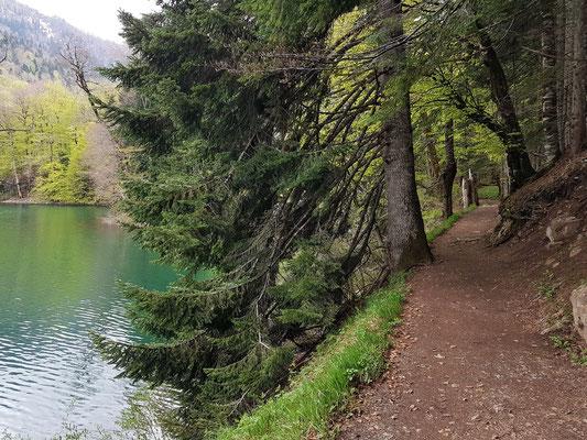 Wanderweg um den Biogradsko Jezero