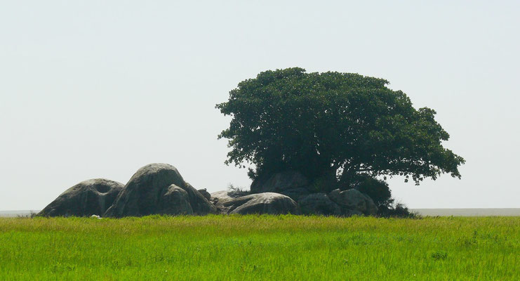 Granitene Felsblöcke (kopjes) in der Serengeti