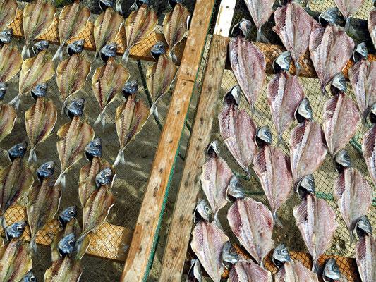 Trockengestelle mit Stockfisch