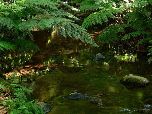 An einer Quelle im Parque Nacional de Garajonay