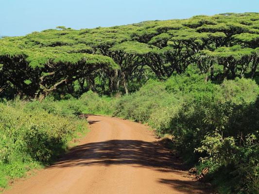 Zufahrt zum Ngorongoro-Krater