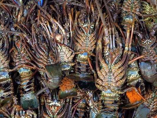 Auf dem Fischmarkt in Hurghada