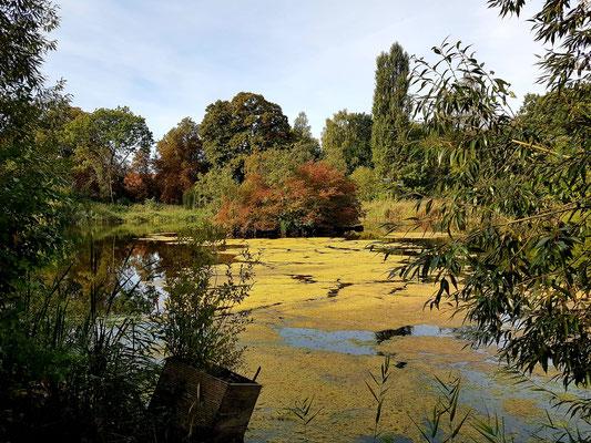 Teich im Landschaftspark Schloss Neetzow