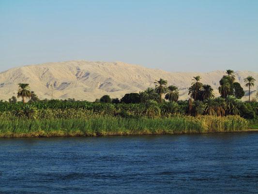 Typische Nillandschaft mit Palmen und Bananenplantagen