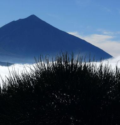 Pico de Teide über der Passatwolke, Blick von der Straße La Laguna - Las Cañadas nach W