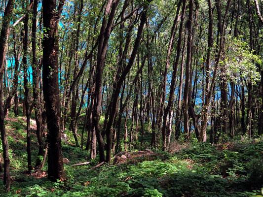 Auf dem Wanderweg vom Arco Naturale zum Belvedere Tragara