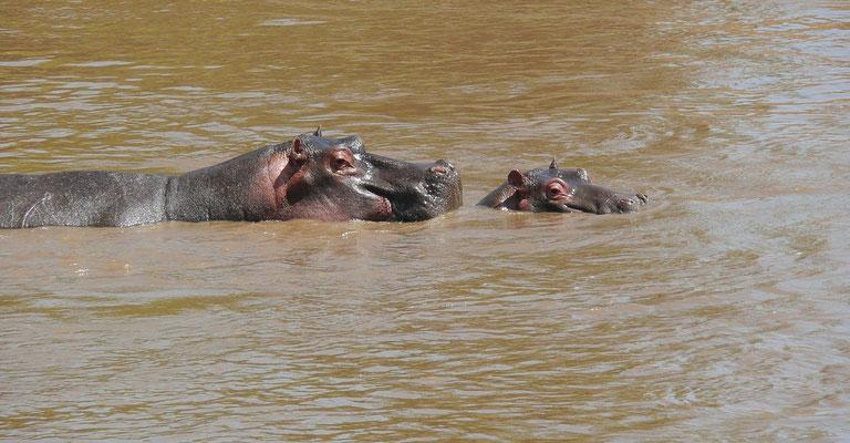 Der Mara führt als einziger Fluss das ganze Jahr über Wasser und sichert damit das Überleben riesiger Herden wilder Huftiere.