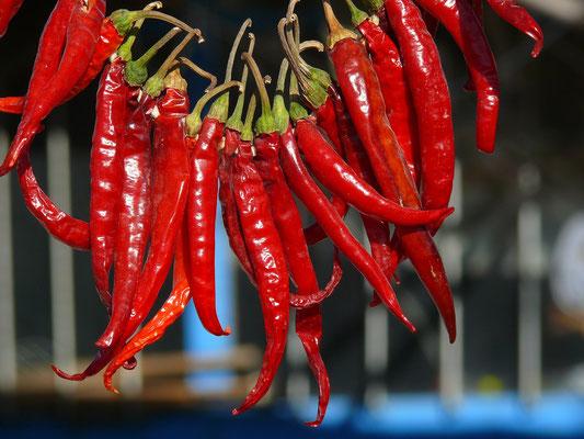 Als Chilis bezeichnete Fruchtformen der Paprika
