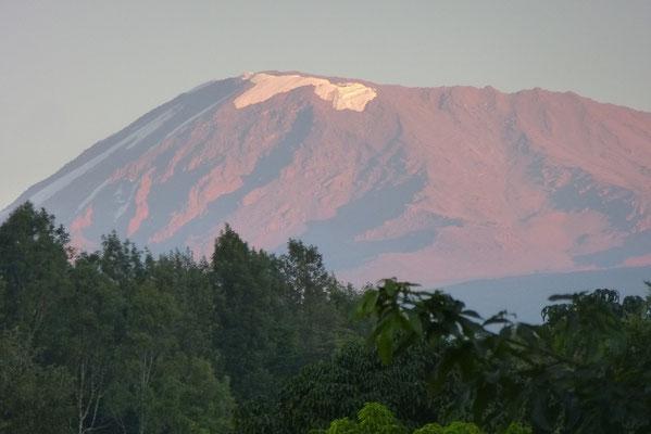 Kilimanjaro am 07.02.2016, 06:45 (Foto: Rita Ganster)