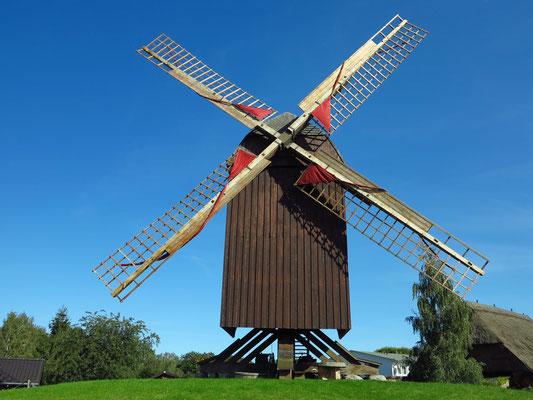 Die Bockwindmühle Eldena, 1533 erstmals erwähnt, gehört zu den ältesten Mühlen an der Ostseeküste.