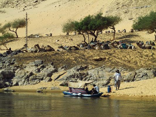 Kamelkarawane wartet auf Touristen zum nubischen Dorf Gharb Seheil.