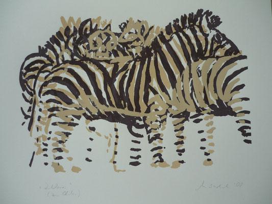 Zebra - Februar