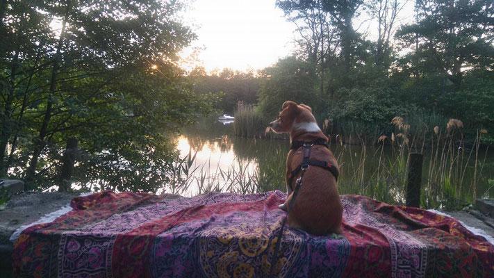 Rundes Mandala Tuch unterwegs mit Hund