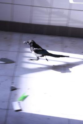 Birdsong --- 2010