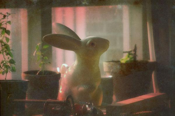 rabbit --- 2012