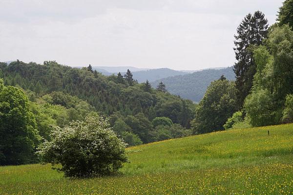 Appenrod im Nationalpark bei Gellershausen, Foto Georg Schöke