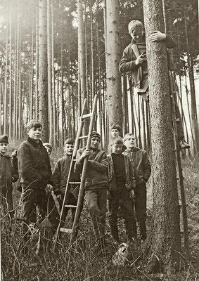 Anbringung von Nistkästen in einem Fichtenaltholz, auf der Leiter Walter Lübcke