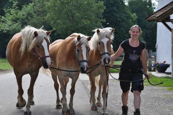 Nachdem die Pferde die Koppel verlassen haben,