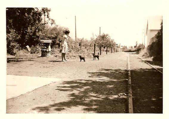 """Le jardin et la voie ferrée, en 1960. On peut voir le toit de l'ancienne caserne de pompiers qui est aujourd'hui une salle municipale. En face, de l'autre côté de la rue, se trouvait """"La Jabotière"""", aujourd'hui démolie."""
