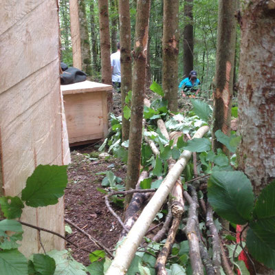 Aeste bilden die Ruecklehne des Waldsofas
