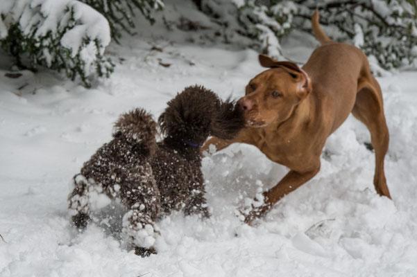 Spielen im Schnee macht Spass, aber …