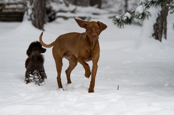 … warum hat DER keine Schneeballen an den Füßen?