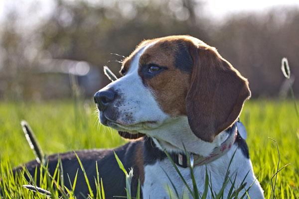 Beagle II