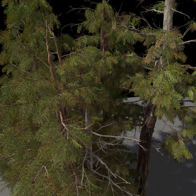Texturing & Lookdev of all Pine Trees and Foliage