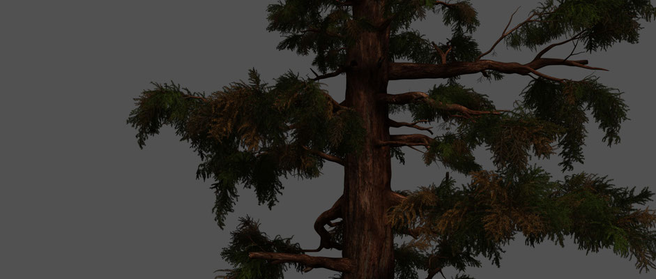 One of many 'GEN' Trees. I textured & lookdev'd all Pine Forest Trees & Foliage