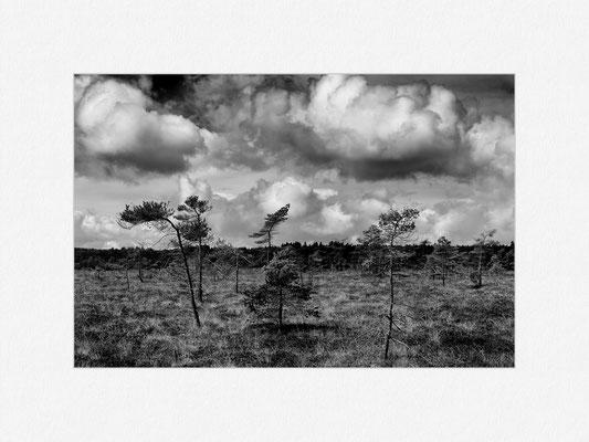 Schwarzes Moor, Rhön, 2013 [No.5] – © Oliver G. Miller