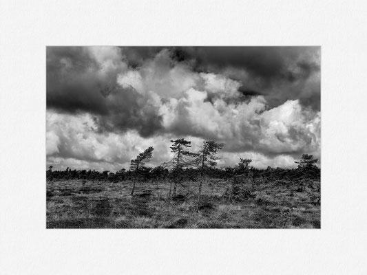 Schwarzes Moor, Rhön, 2013 [No.4] – © Oliver G. Miller