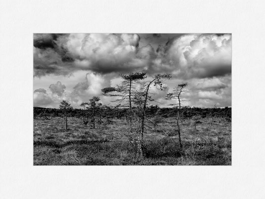 Schwarzes Moor, Rhön, 2013 [No.1] – © Oliver G. Miller
