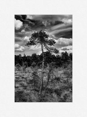 Schwarzes Moor, Rhön, 2013 [No.2] – © Oliver G. Miller