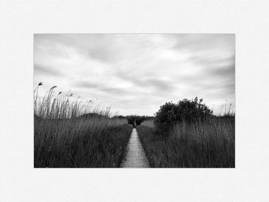 Ameland, Vogelkijkpunt, 2017 [No.18] – © Oliver G. Miller
