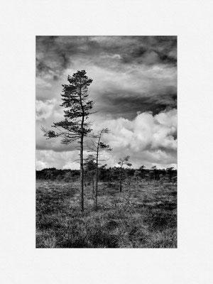 Schwarzes Moor, Rhön, 2013 [No.6] – © Oliver G. Miller