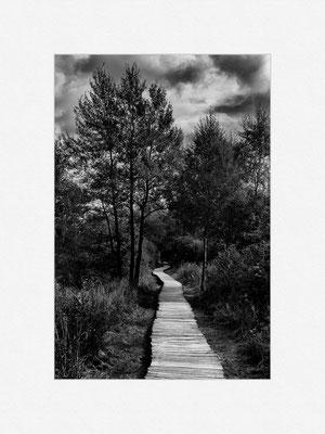 Schwarzes Moor, Rhön, 2013 [No.8] – © Oliver G. Miller