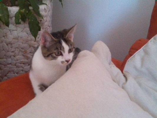 Katzenbaby Krümel aus Gilching