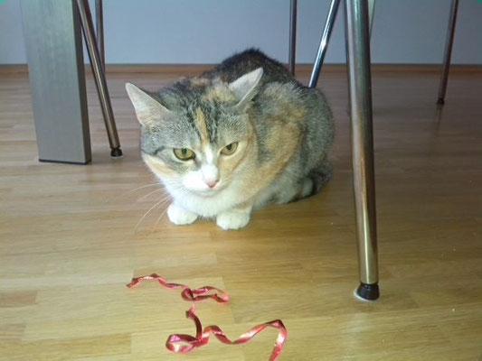Katze Sally aus München-Neuaubing