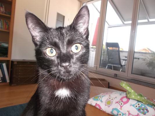 Katzenbaby Strolchi