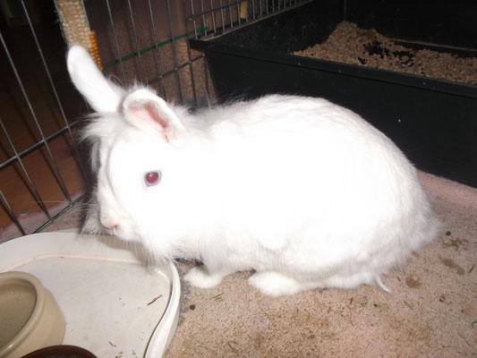Kaninchen Snowy aus Germering